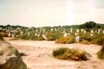 Die Steinreihen von Carnac 1979